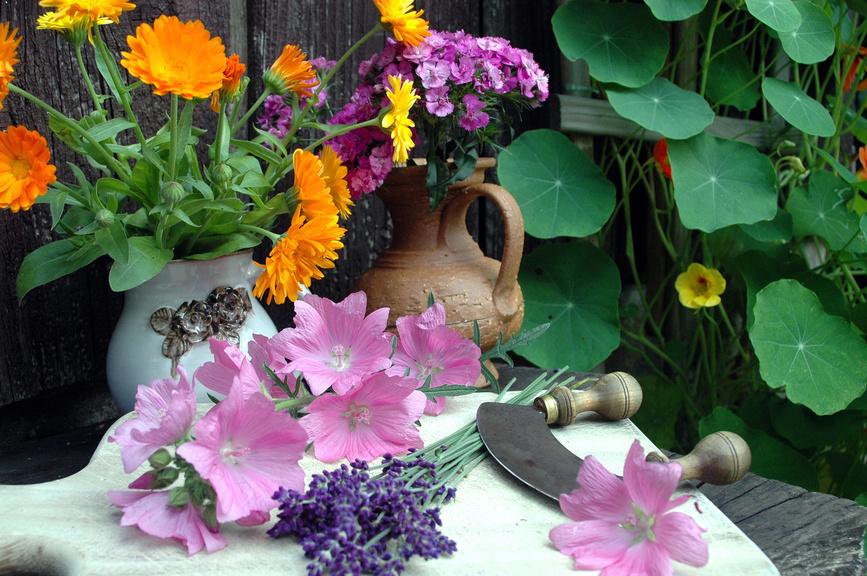 Heimische Kräuter und Heilpflanzen